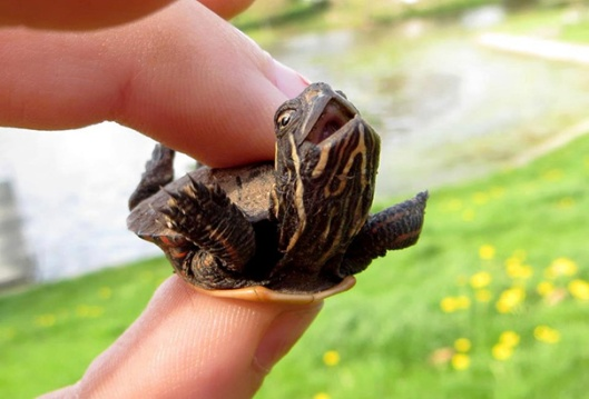 cute-rùa-và-rùa-31__605